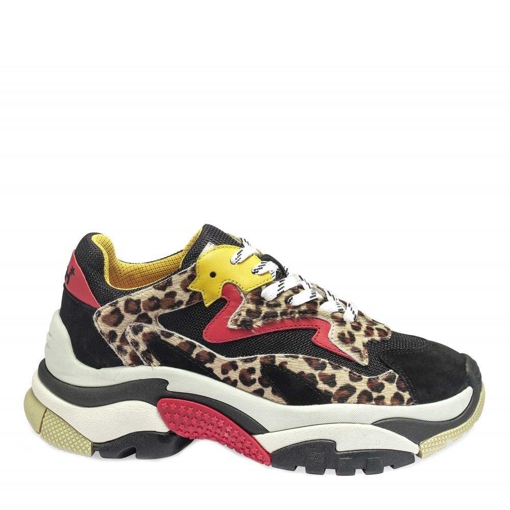 Ash Addict Sneakers in Cheetah Print